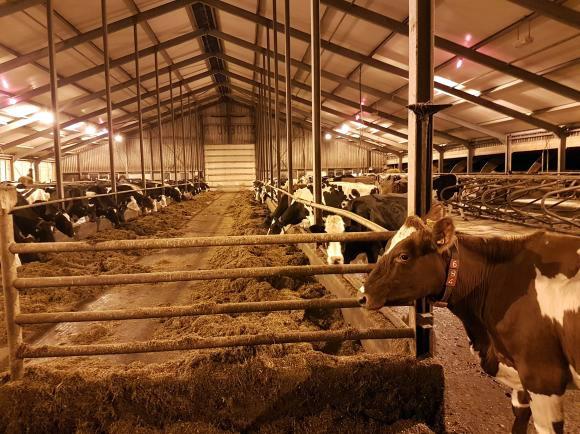 Is er soms iets mis met een niet biologisch melkveebedrijf?