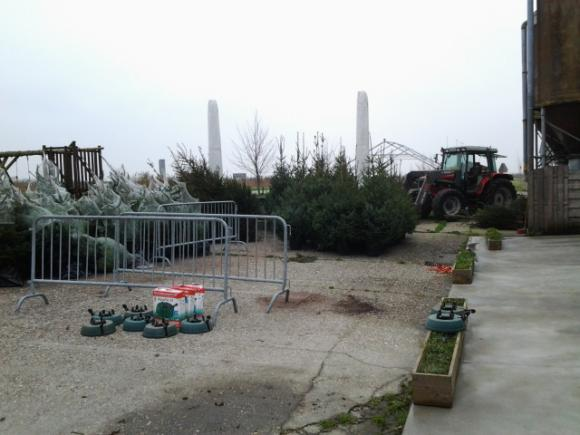 Kerstbomen en kerstijs