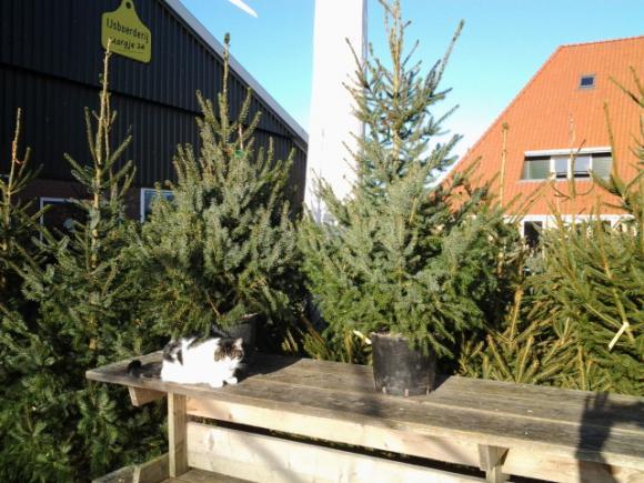 Kerstboomverkoop