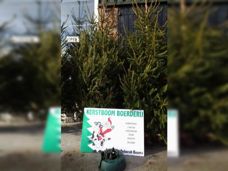 2m Kerstboom
